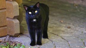 Freilebende Katzen finden oft nicht ausreichend Futter und leiden unter Krankheiten.